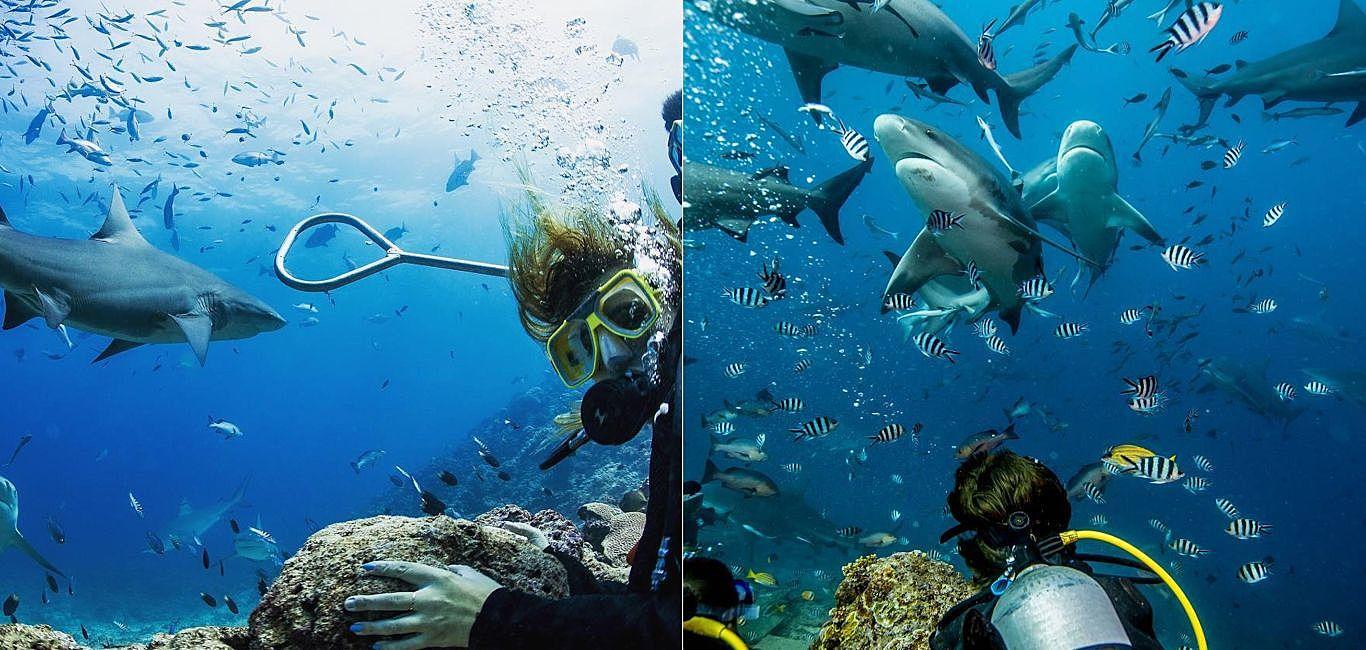 沒有鐵籠,沒有防護,來斐濟體驗刺激好玩的鯊魚潛水