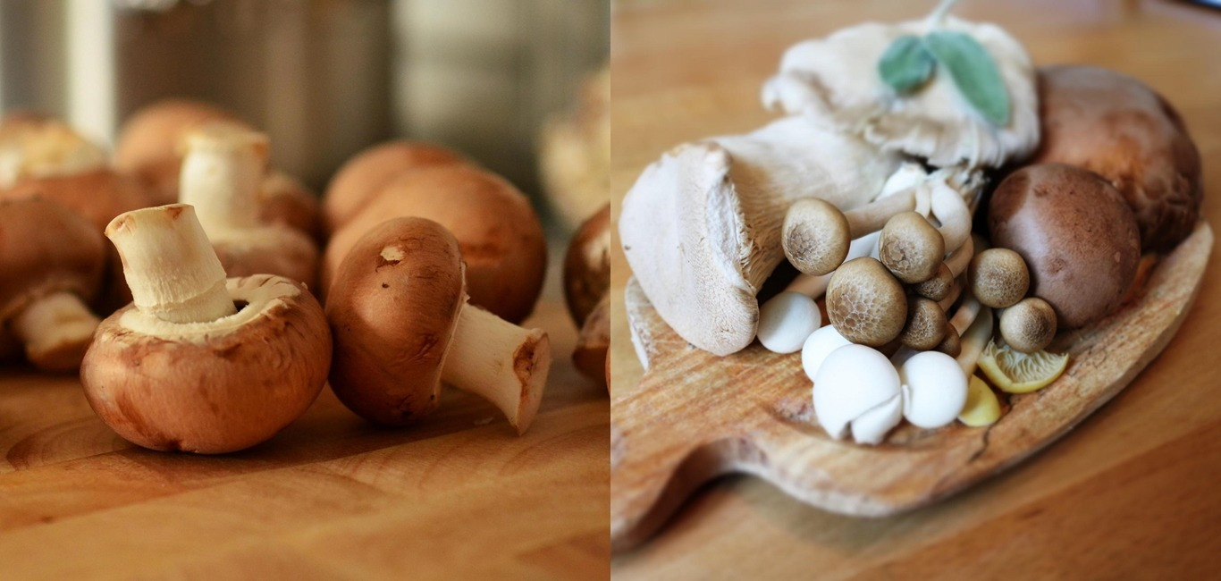 菇類被譽為「蔬菜牛排(Vegetable Beef Steak)」,一起來看看菇菇厲害之處!
